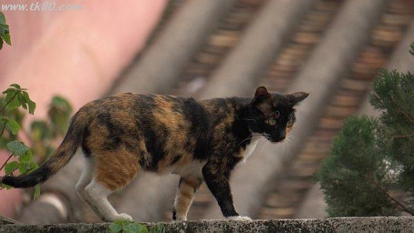 猫、ネコ、ねこ。