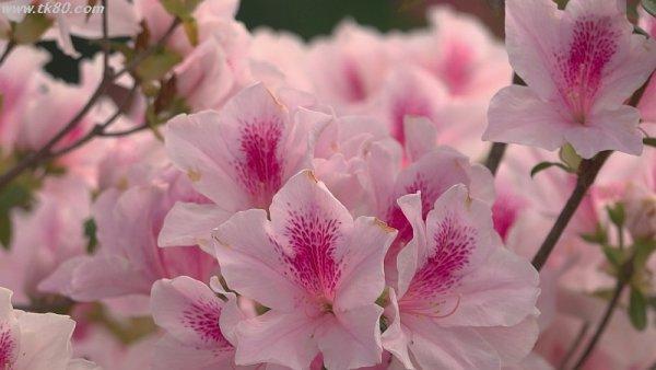 桜を見たい!!(;´Д`)