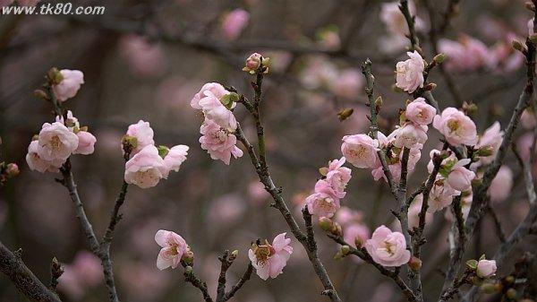 梅は咲いたかぁ~ヽ(' ∇' )ノ