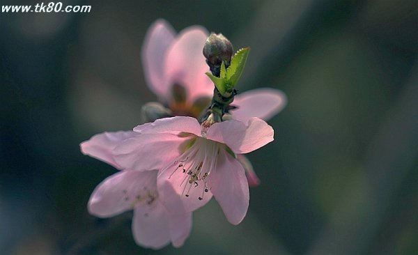 桜~桜~(╥﹏╥)