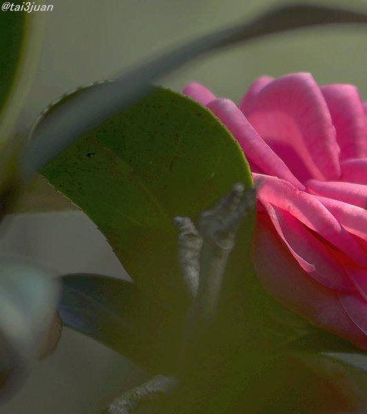 久々の椿と薔薇公園~(^o^)/