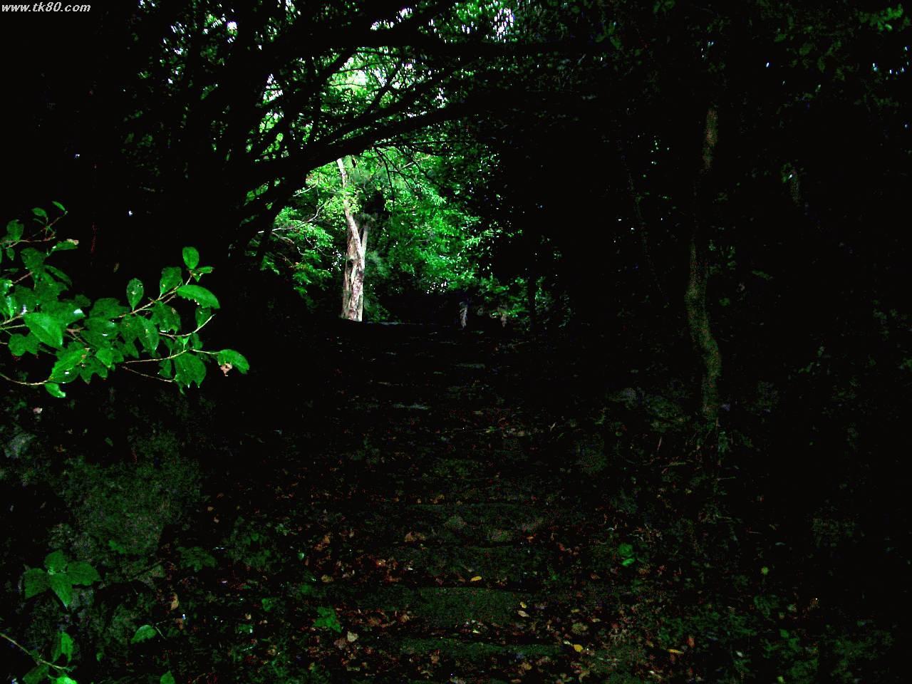 藪地島ジャネー洞?付近です。周りはジャングルです。