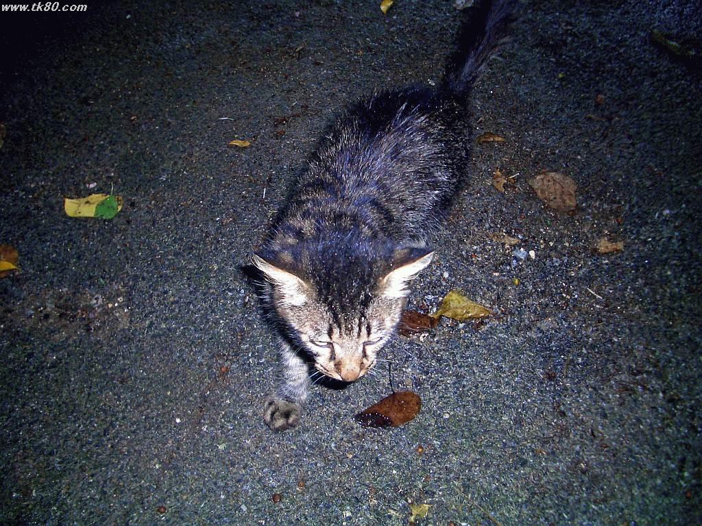 ジャネー洞、ジャングルから現れた猫、人懐っこく恐らく捨猫でしょう。