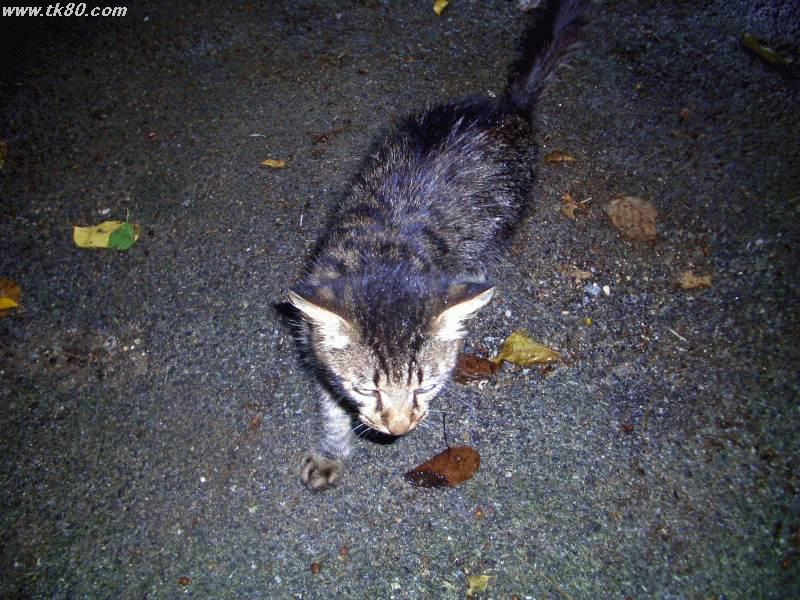 藪地島ジャネー洞付近で見つけた人懐っこい野良猫です。