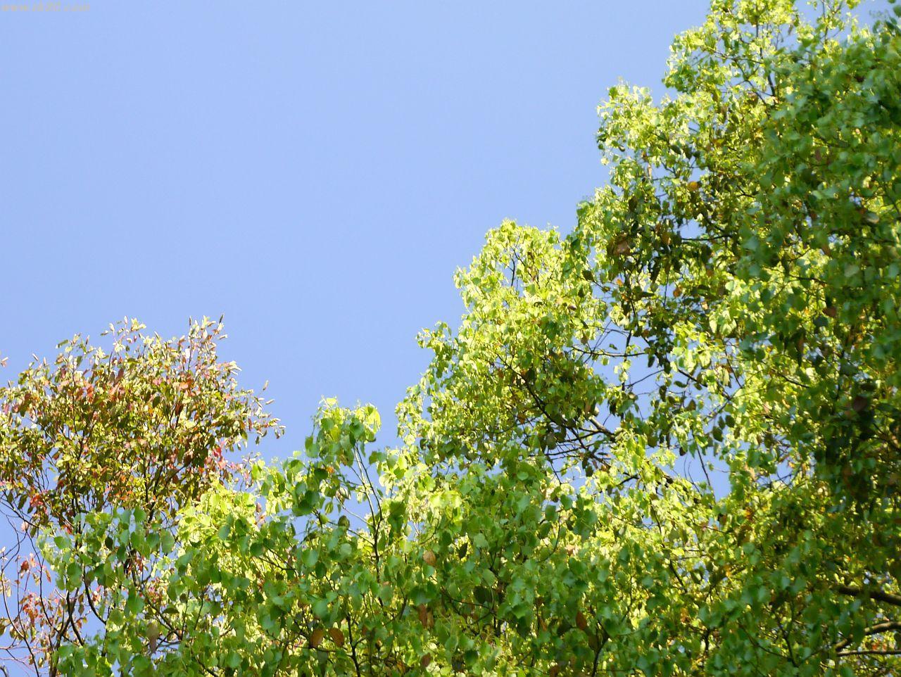 深センでは「雲一つ無い青空」というのは年間通じて数回しか有りません